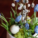 Happy Easter grape hyacinths and willow