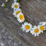 Daisy Crowns for Midsommars Eve